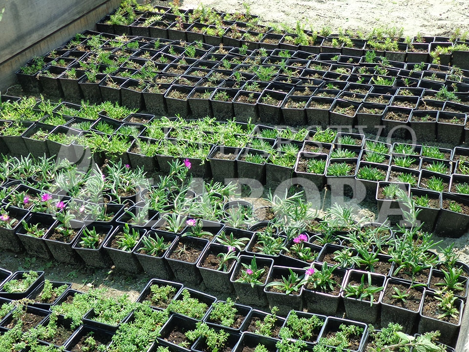 uzgoj cvijeća