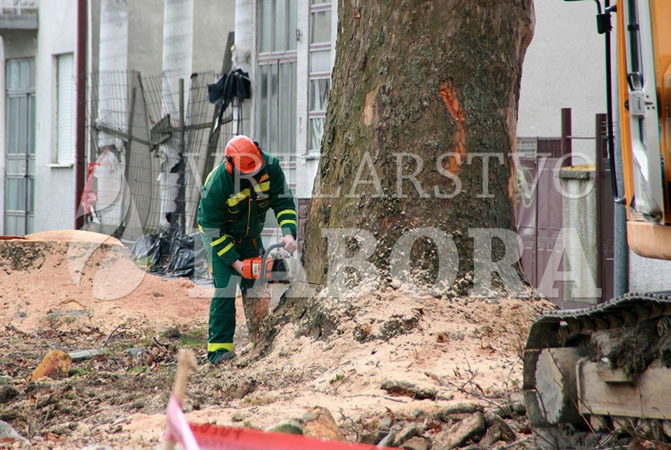rušenje drveća