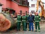 rušenje stabla